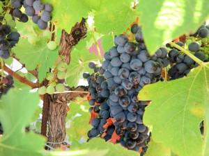 Wine tasting in Requena Spain