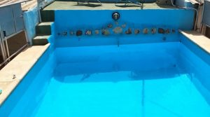 piscina-3.jpg_KqZknCD.1143x857
